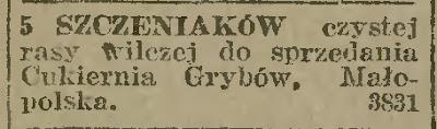 szczeniaczki Grybów 1922
