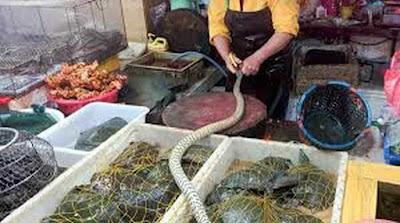 Mercado-de-Wuhan