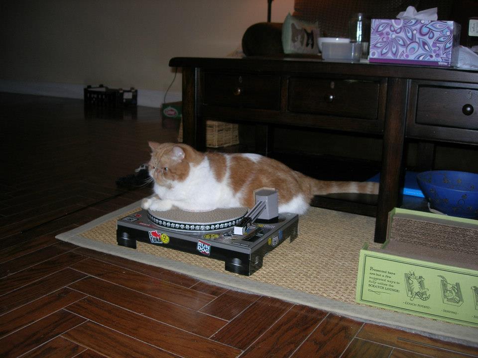 Chester SmooshyFace: Exotic Shorthair Garfield: I'm a cat dj!