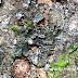 Uniknya Anggrek Terkecil di Dunia-Tumbuh di Tahura Djuanda Bandung