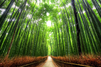 Bamboo Forest,Kyoto-Japan