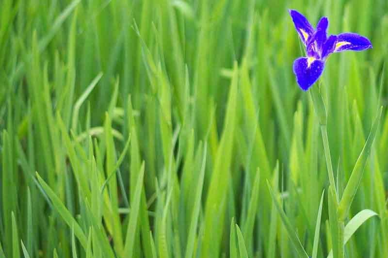One Iris