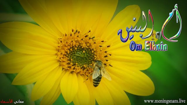 معنى اسم ام البنبن وصفات حاملة هذا الإسم Om Elbninb,