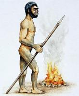 Gambar .Profil Homo
