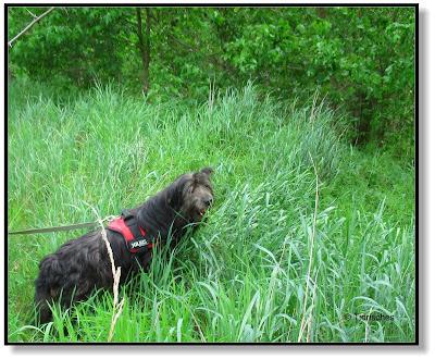Tierisches - mit Hund im Wald
