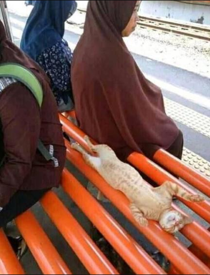 Apa itu santuy Kucing santuy duduk bersama ibu-ibu