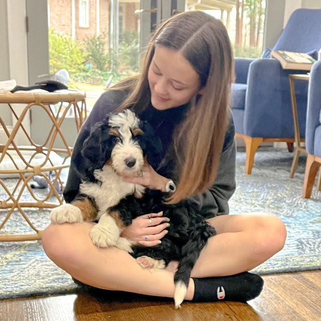 teen girl with a Bernedoodle puppy in her lap