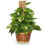 plant in spanish