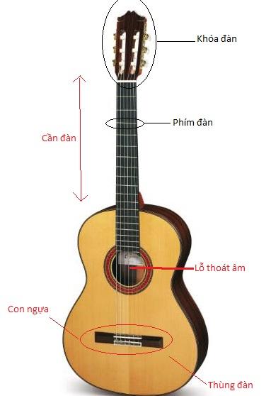 Cấu tạo đàn guitar
