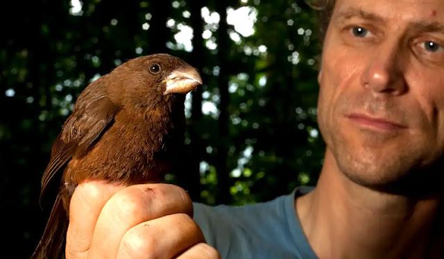 burung kenari terbesar di dunia