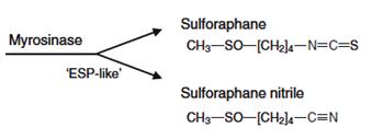 Image result for sulforaphane nitrile