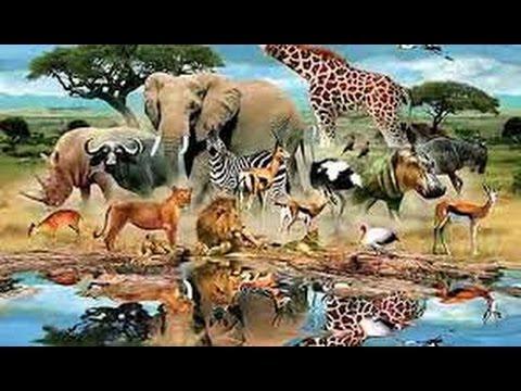 5 حيوانات امرنا الرسول بقتلها حتى لو كنا فى الحرم او فى الصلاة اعرف لماذا %26.jpg