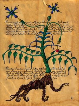 Risultati immagini per voynich manuscript alien