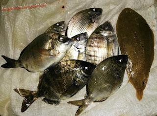 0498 - Uns peixes por ai