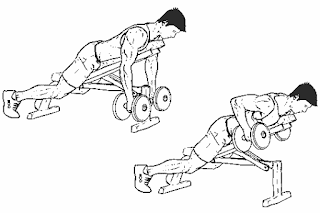 4. Chest Supported Dumbbell Row