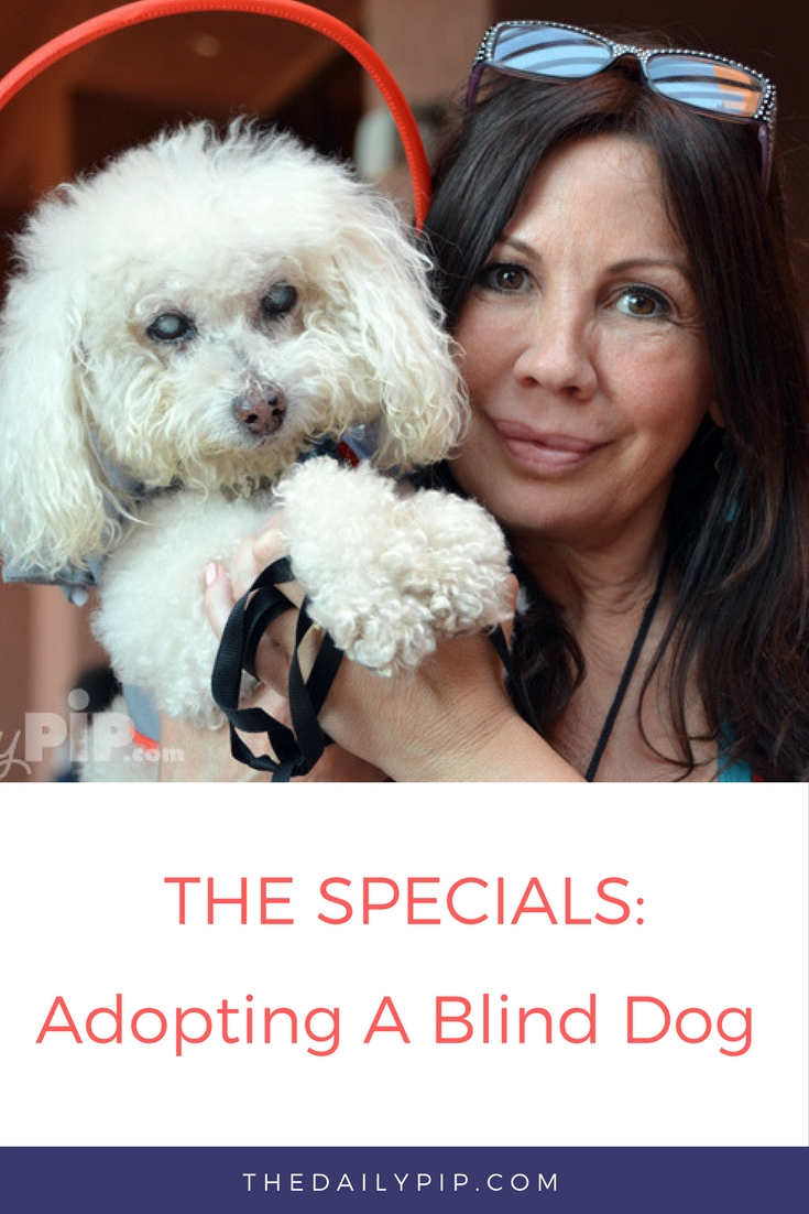 Silvie, founder of Muffin's Halo Helps Blind Dogs through her company foundation