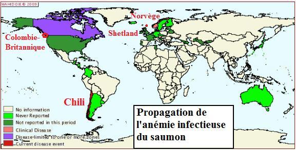 France : le marché du saumon ne connait pas la crise….ISA