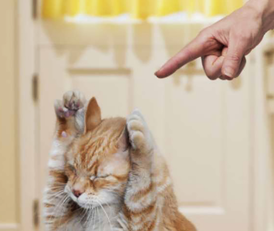 Training Your Cats or Kittens With Positive Reinforcement