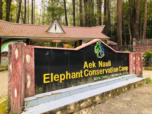 wisata-edukasi-penangkaran-gajah-di-medan-aek-nauli