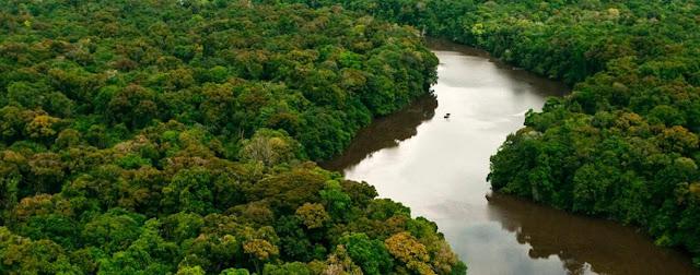 Amazonia y biologia