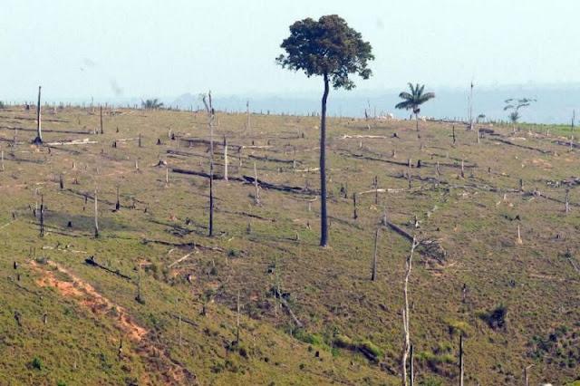 'Era Bolsonaro' está gerando desmatamento de 19 hectares por hora na Amazônia