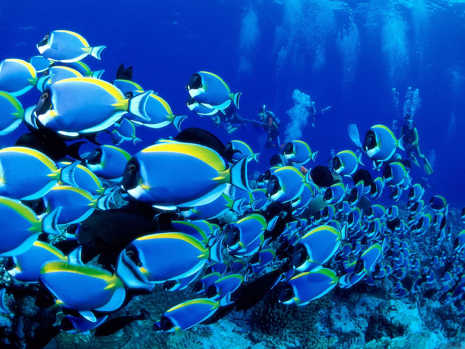 Beautiful UnderWater Sea Fishes HD Pictures | npicx | we share