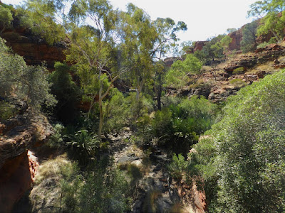 kings canyon cosa vedere