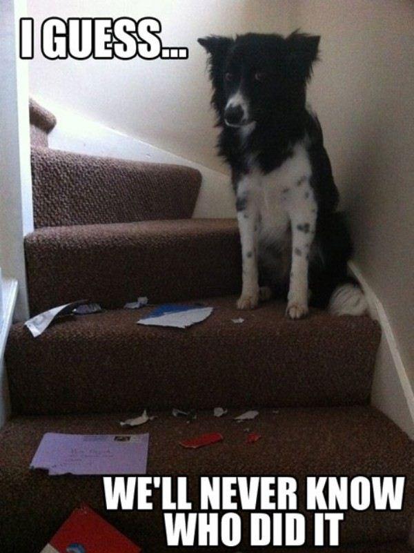 30 funny animal captions - part 2 (30 pics) ~ I Love Funny ...