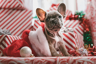 A cute puppy is sitting in a Santa hat amidst a stack of presents