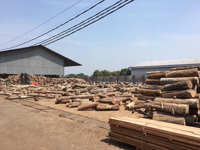 大量のチークの原木