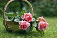A wicker basket holding long-stemmed pink roses.