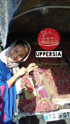 A traveler visiting barberry farm in Iran,one of the central points of barberry prouduction