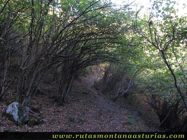Senda Cartero, Peña Salón y Vibolines: Atravesando bosque cerca de Víboli