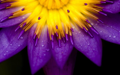purple and yellow flower widescreen hd wallpaper
