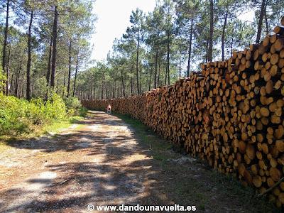 Camino en bosque con árboles talados en La Velodyssee, Francia