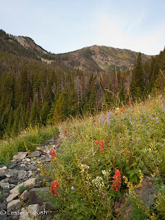 Indian paintbrush along the trail, Spanish Peaks, Montana