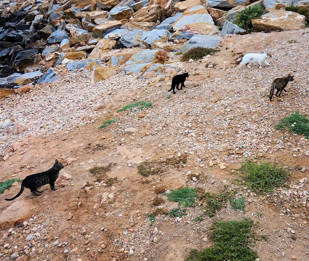 The feral cats of Torrevieja, Murcia, Spain on the beach