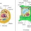 Perbedaan Hewan Dan Tumbuhan Secara Umum Dari Berbagai Aspek