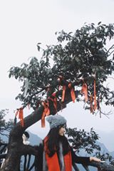 di-den-fenghuang