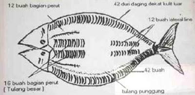 Cara Membersihkan Duri Ikan Bandeng