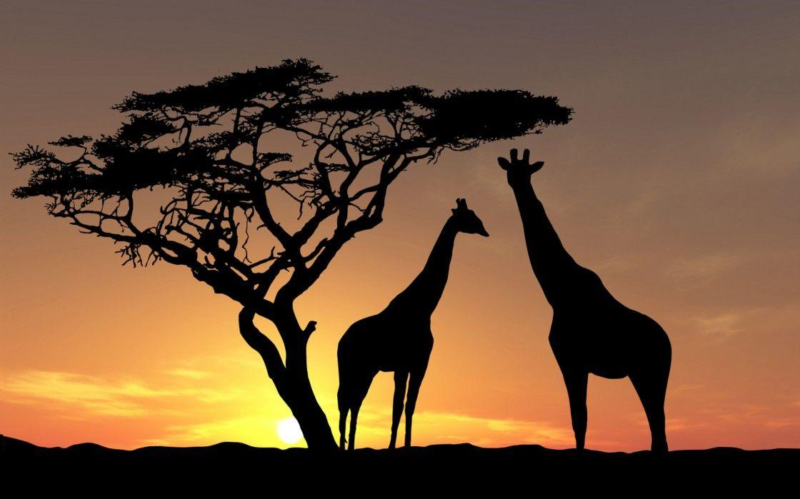 Unusual Cropped Africa Wallpapers : Desktopaper