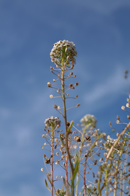 Plante médicinale - Pixabay