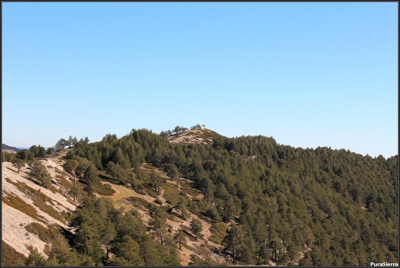 Sabinas rastreras y pinos albares en el Cerro De Los Malenes (Albarracín)