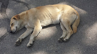 Tired dog, Stray, Dog, Yambol. Yambol Streets,