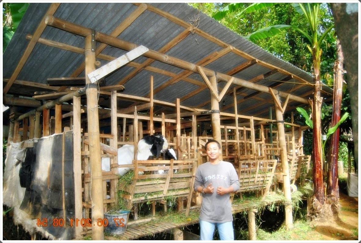 gambar contoh kandang kambing dari bambu