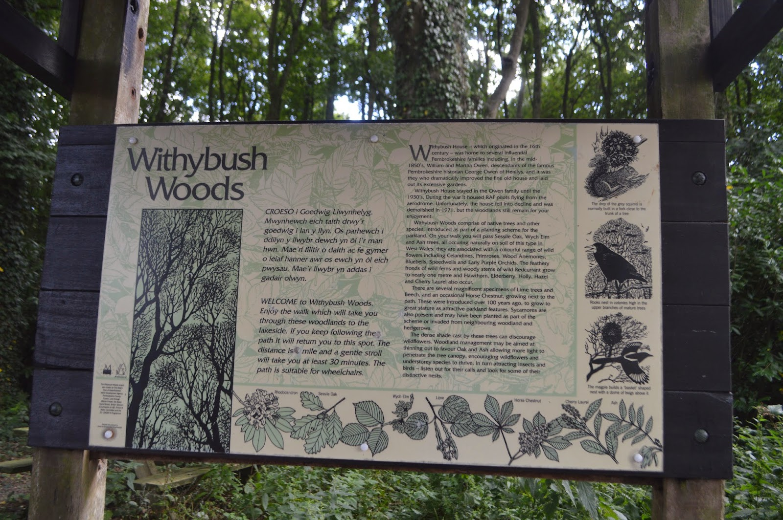 , A Woodland Walk at Withybush Woods #CountryKids