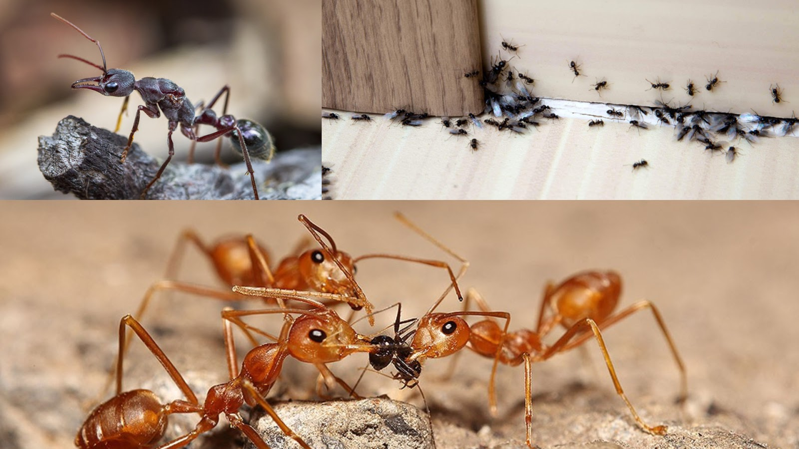 Why Ants Love Your Kitchen
