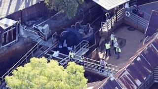 """El accidente ocurrió en el juego """"Thunder River Rapids"""", del parque de diversiones Dreamworld, ubicado en la Costa de Oro, al este de Australia. Se vivieron escenas de pánico."""