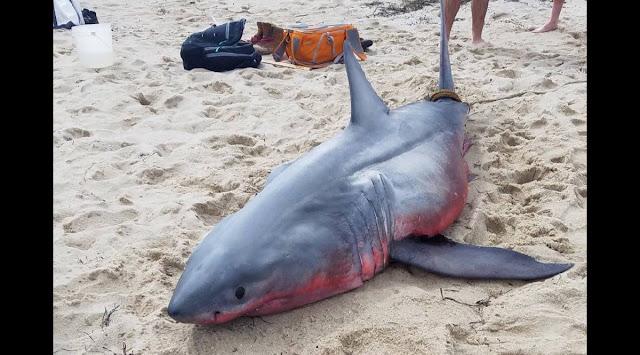 Рыбак выловил мёртвую беременную акулу, внутри которой выросло чудовище с человеческим лицом