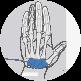 Wrist bones of the hand